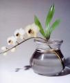 «Орхидея»